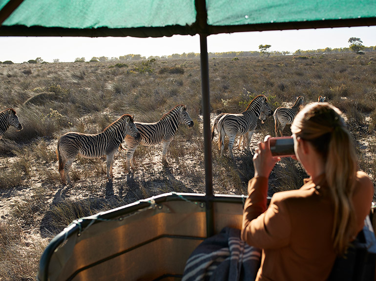 A students takes a photograph of zebras during a safari in Botswana.