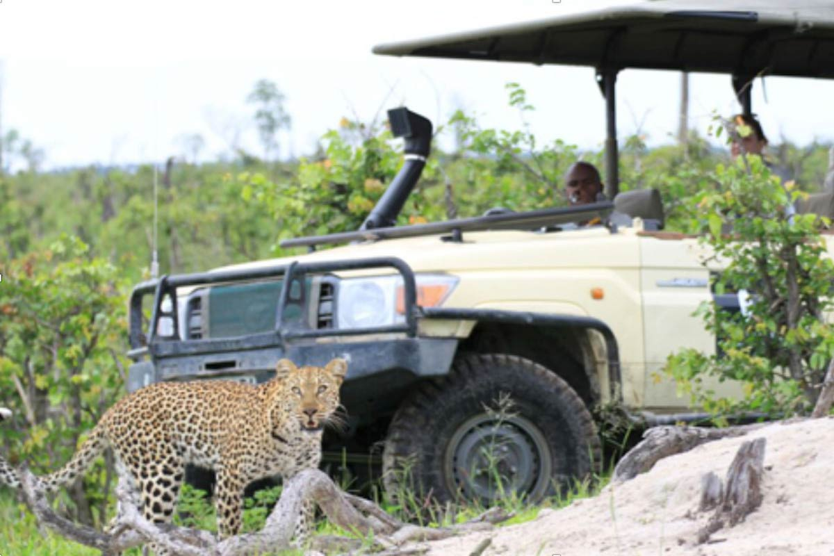St. Thomas students take a picture of a cheetah while on a safari in Botswana.